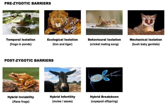 D2 Species And Speciation Bioninja