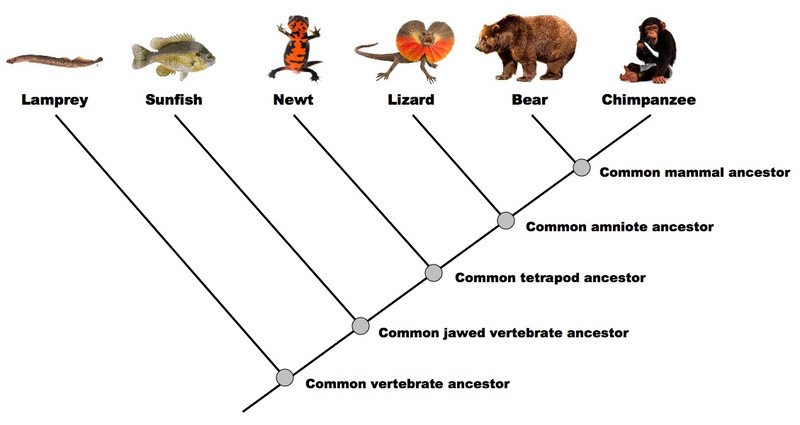 D5 Phylogeny and Systematics | BioNinja
